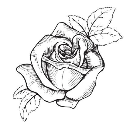 flor color de rosa, la ilustración en el estilo de grabado