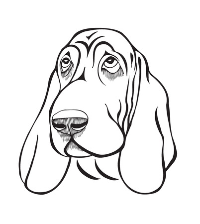 doggies: Dog breed basset head, black and white stylized illustration Illustration