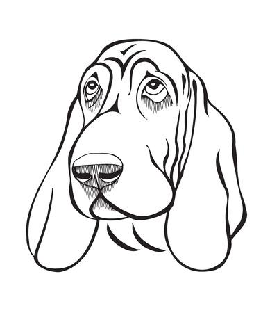 Dog breed basset head, black and white stylized illustration