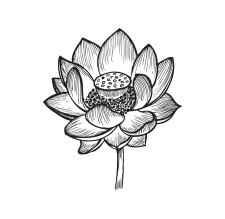 The lotus flower black and white vector illustration royalty free the lotus flower black and white vector illustration royalty free cliparts vectors and stock illustration image 53929829 mightylinksfo