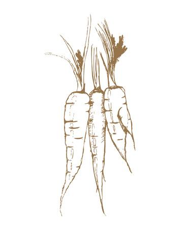 carrots: three carrots, sketch, illustration, graphics,