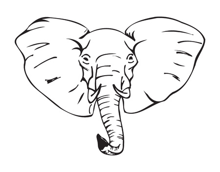 elephant head, african elephant, black and white vector illustration