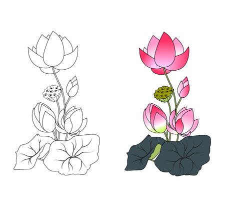 Blooming lotus, coloring, vector illustration