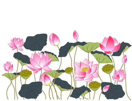 Flowers and lotus leaves, illustration Zdjęcie Seryjne - 55997111