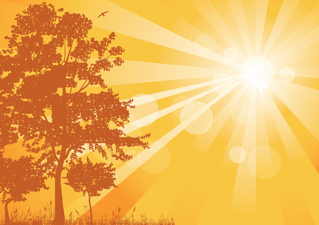 suns: summer landscape, silhouettes of trees and the suns rays, illustration