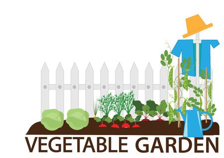 Gemüsegarten, Gemüsebeete, eine Vogelscheuche und Gartengeräte, Illustration