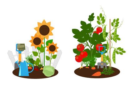 Gemüsegarten, Gemüsebeete und Gartengeräte, Illustration Vektorgrafik