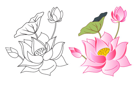 water lilies: pink lotus flowers and bud, coloring, vector illustration Illustration