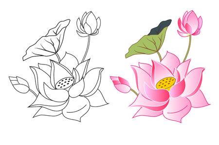 różowe kwiaty lotosu i bud, kolorystyka, ilustracji wektorowych Ilustracje wektorowe