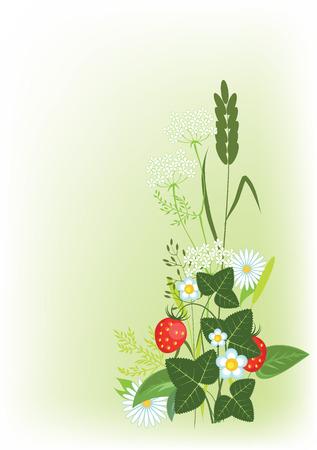 meadow flowers, herbs and strawberries, vector illustration Vector Illustration