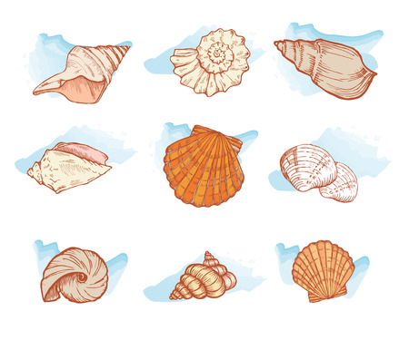 sea shells isolated on white background set, vector illustration Illustration