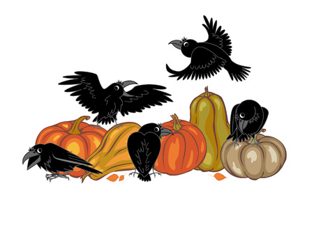 crows: crows and pumpkins on a white background. vector illustration Illustration