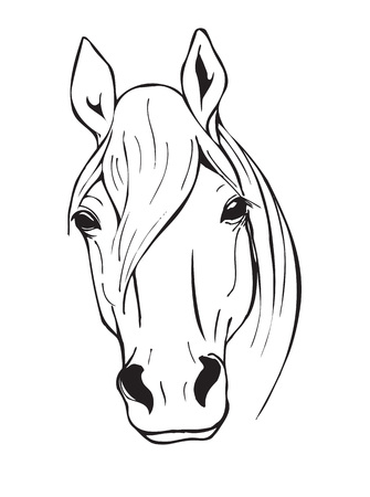 horse head, farm animal, black and white vector illustration in graphic style