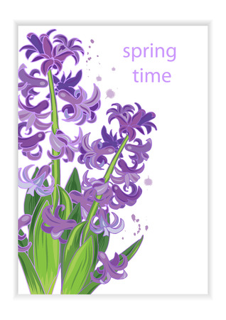 purple hyacinths, template for advertising, invitation, greeting card, vector illustration