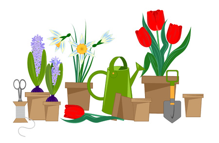 Spring bulbous flowers in pots and garden tools, vector illustration Illustration
