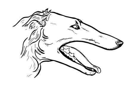 borzoi: Greyhound head in profile, face dog, portrait, black and white graphic vector illustration Illustration