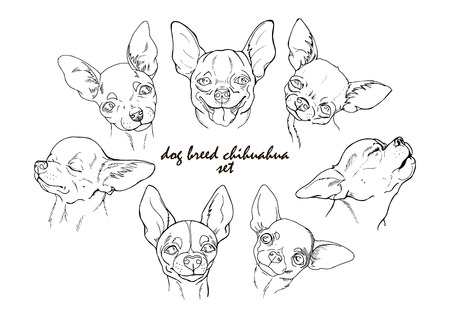 A dog breed chihuahua set, black and white vector illustration