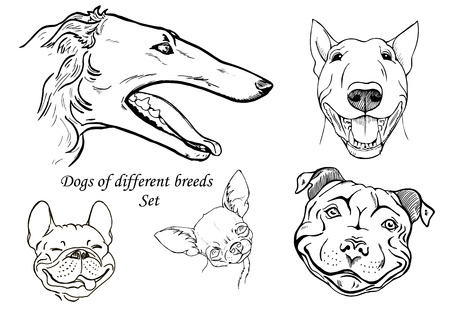 A portraits of dogs of different breeds, black and white graphic vector illustration Illustration