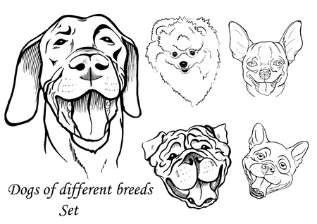 A portraits of dogs of different breeds, black and white graphic vector illustration Ilustração