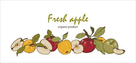 Colorful fresh apples, whole, cut in half and into slices, natural product, vector illustration Illustration