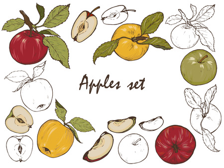 Whole apples, cut into halves and slices, spices and berries, set, vector illustration Illustration