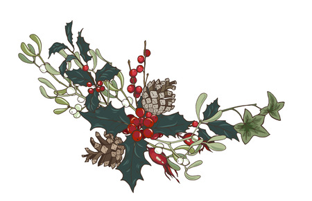 Composition of Christmas plants, fir branches, Holly, cones, ivy and mistletoe, vector illustration