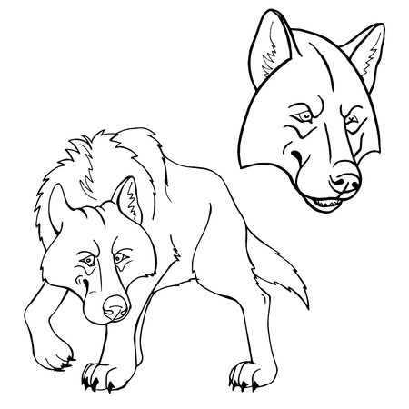 Wolf in full growth and muzzle separately, black and white stylized vector illustration