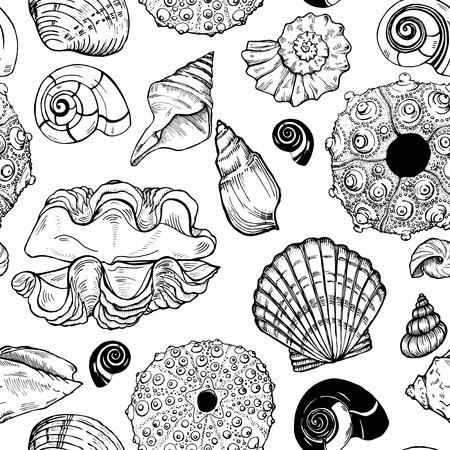 sea shells and sea urchin shells