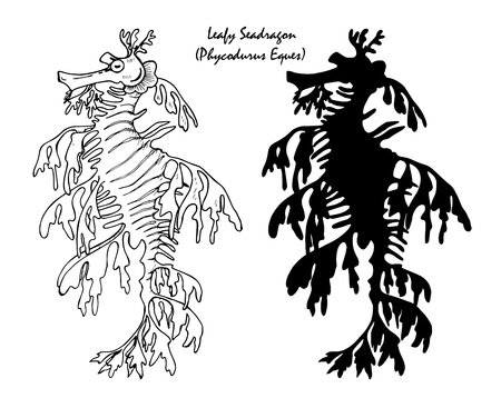 The leafy seadragon, marine fish in the family Syngnathidae,  black and white illustration in graphic style and silhouette Illustration