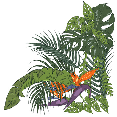 Tropical plants and flowers, palm and monstera leaves, strelitzia flowers, vector illustration Vectores