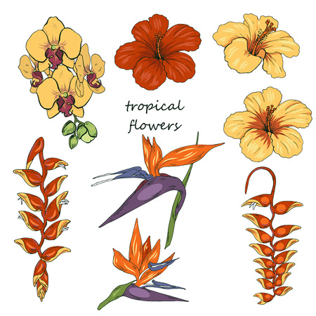Tropical flowers, orchids, hibiscus, Heliconia and strelitzia isolated on white background, vector illustration Illustration