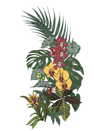 Tropical plants and flowers, palm and monstera leaves, Orchid  flowers, vector illustration Illustration