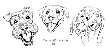 portraits of dogs of different breeds, black and white graphic vector illustration Ilustracja