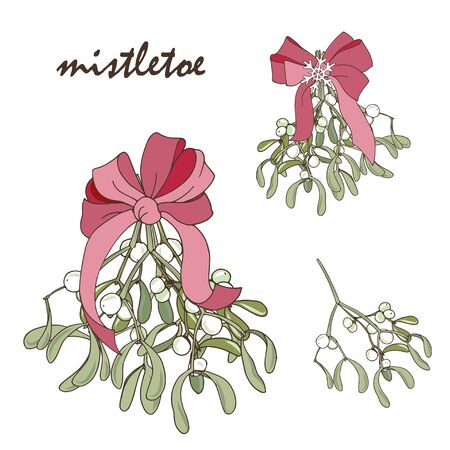 mistletoe bouquet with pink bow on white background, Christmas plants, traditional winter flora, vector illustration