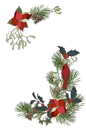 Christmas plants, composition of pine branches, poinsettia, Holly and mistletoe, cardinal bird, vector illustration