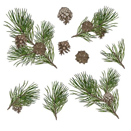Christmas plants set, pine branches with cones isolated on white background, vector illustration Stock Illustratie