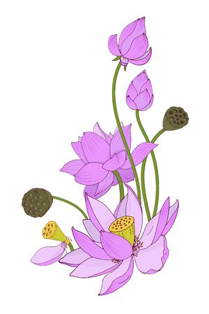 Flowers and buds of pink Lotus composition, vector illustration