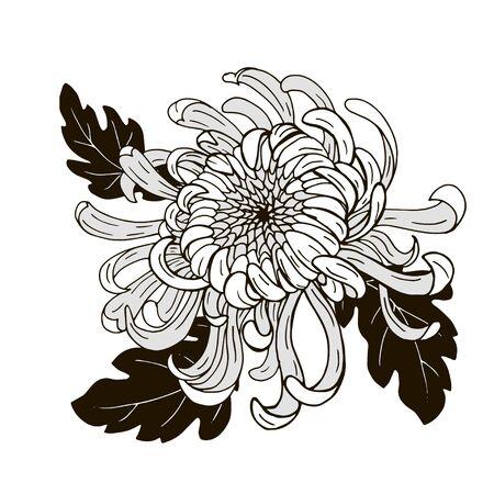 Chrysanthemum flower, black and white vector illustration
