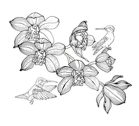orchids and hummingbirds, composition for design, black and white vector illustration