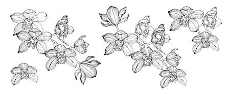 Orchid flowers, compositions for design, black and white vector illustration