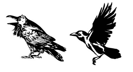Sitting and flying Raven, vector illustration