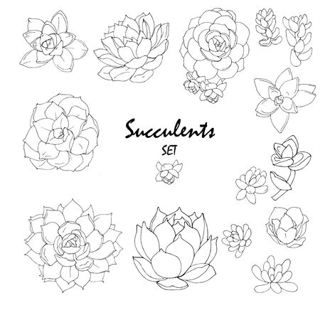 succulents of different types black and white vector illustration, set on a white background