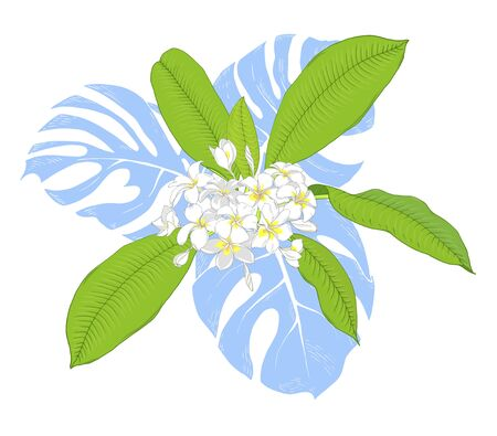 Plumeria, tropical plant with fragrant flowers, vector illustration