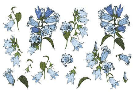 Bluebells flowers, set of flower buds and leaves on a white background, vector illustration