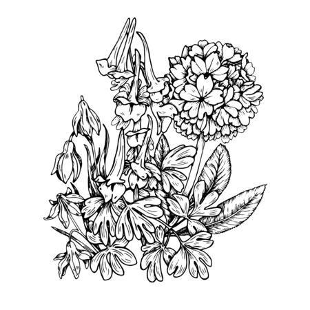 Spring flowers, flowering crested and primrose, black and white vector illustration Ilustração