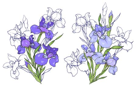 Iris flowers, composition of purple and blue irises, vector illustration