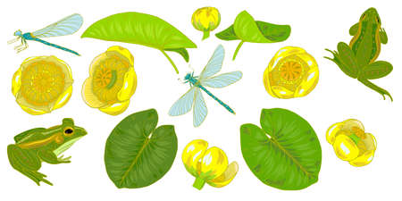 Flowers and leaves of yellow water Lily, nuphar lutea, dragonfly and frog, plants and animals of pond and lake, set of elements, vector illustration Vektorové ilustrace