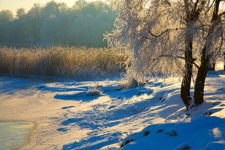 winters: Winters landscape