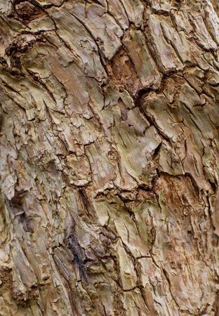 interstice: Texture of surface of old tree