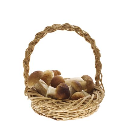 Squirrels breds in wicker basket photo